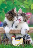 Apollo-sha Jigsaw Puzzle 48-646 Pet Lovely Cat (300 Pieces)