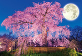 Beverly Jigsaw Puzzle 51-227 Japanese Scenery Cherry Blossoms in Maruyama Park Kyoto (1000 Pieces)
