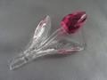 SCS 2004 Pink Tulip