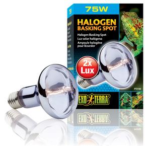 Exo Terra Halogen Basking Spot Lamp - 75 Watt (PT2182)