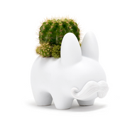 Happy Labbit - Green Cactus -  LOCAL DELIVERY AND PICK UP ONLY