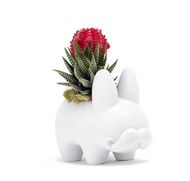 Happy Labbit - Garden - LOCAL DELIVERY AND PICK UP ONLY