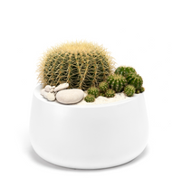 Milano Short Medium White - Barrel Cactus LOCAL DELIVERY ONLY