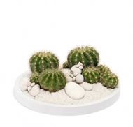 Desert Garden - Circle Cactus 10''