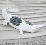 Crocodile - Special Order