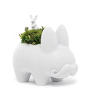 Happy Labbit: Moss and Rabbit