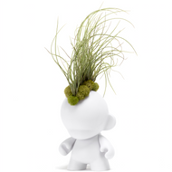 Munny Mohawk Small - Large Juncea Air-plant