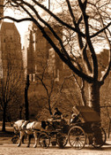 Carriage in Central Park Photo Magnet