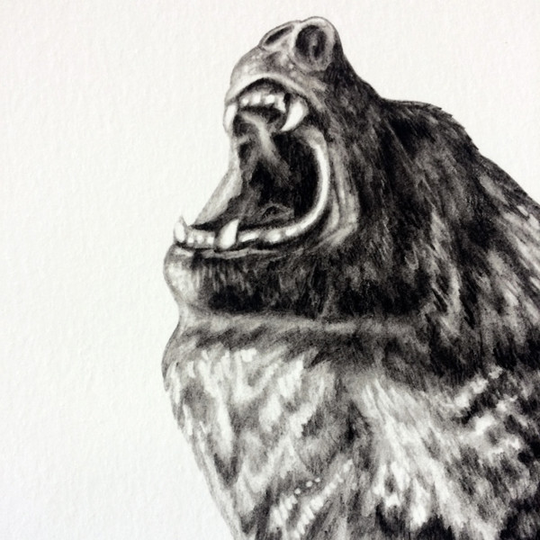 Bear With Me (Special Edition) by Lauren Mortimer at Of Cabbages & Kings
