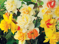 Mixed Double Daffodils