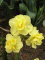 Yellow Cheerfulnes