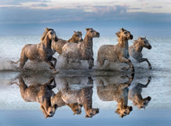 Horses and Reflection