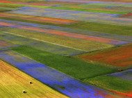 Field of Color
