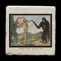 "Houlock  16 November 1835 - 4x4"" cork backed stone coaster"