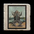 "Unidentified Frog - 4x4"" cork backed stone coaster"
