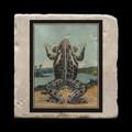 "Unidentified Frog - 4x4"" cork backed stone coaster"