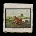 "Unidentified Frog 2 - 4x4"" cork backed stone coaster"