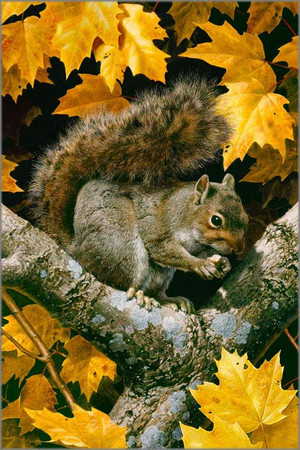 Carl Brenders - Golden Season - Gray Squirrel