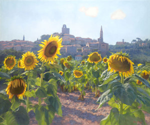 Sunflowers of Castiglion Fiorentino, June Carey  LIMITED EDITION CANVAS