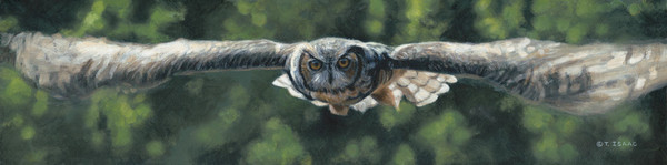 Silent Flight owl by Terry Isaac