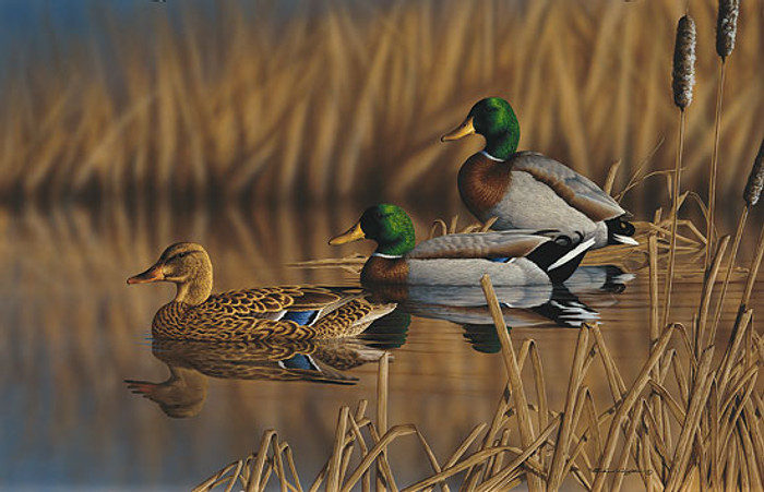 AFTERNOON MALLARDS, by Richard Clifton LIMITED EDITION PRINT