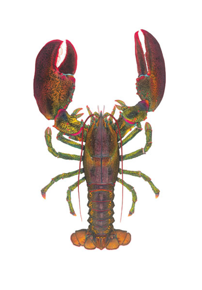 1 1/2 lb Lobster, by Flick Ford OPEN EDITION PRINT