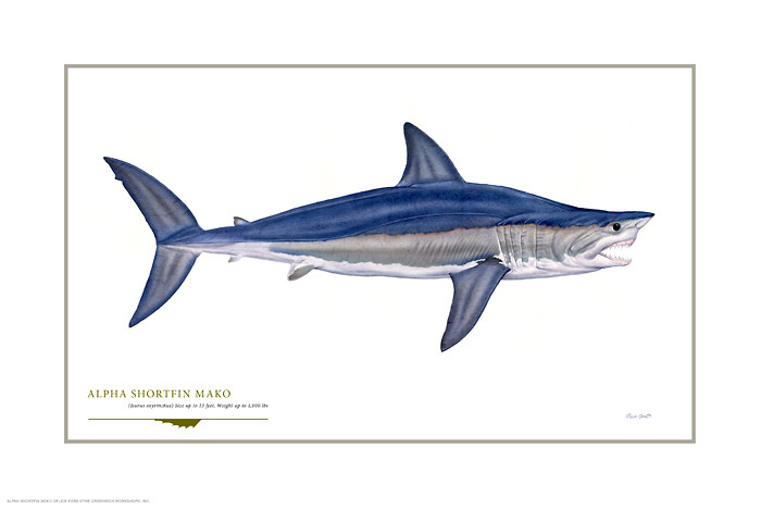 Alpha Shortfin Mako, by Flick Ford OPEN EDITION PRINT