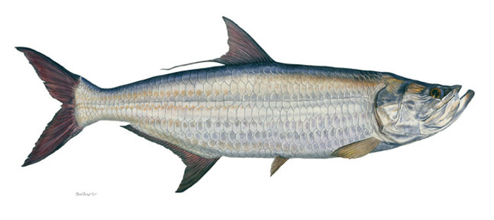 Tarpon, by Flick Ford MASTERWORK CANVAS EDITION