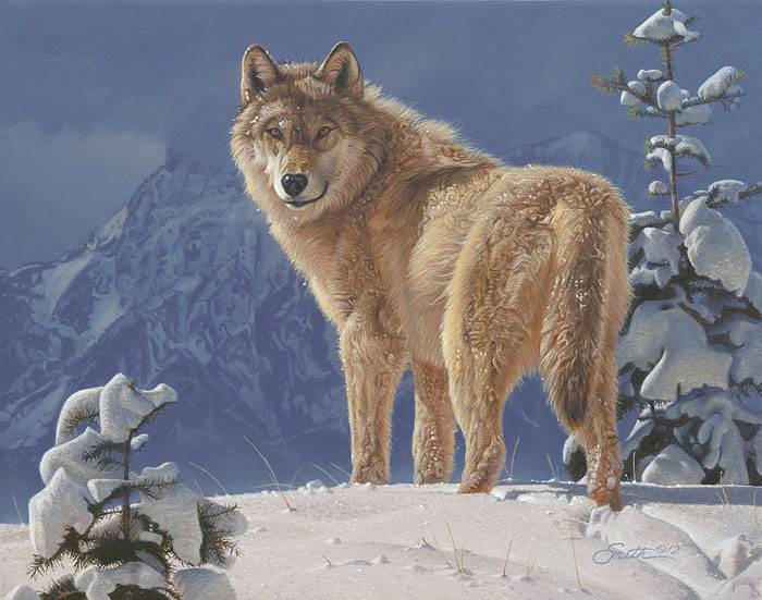 Cold Stare, by Daniel Smith SMALLWORK CANVAS EDITION