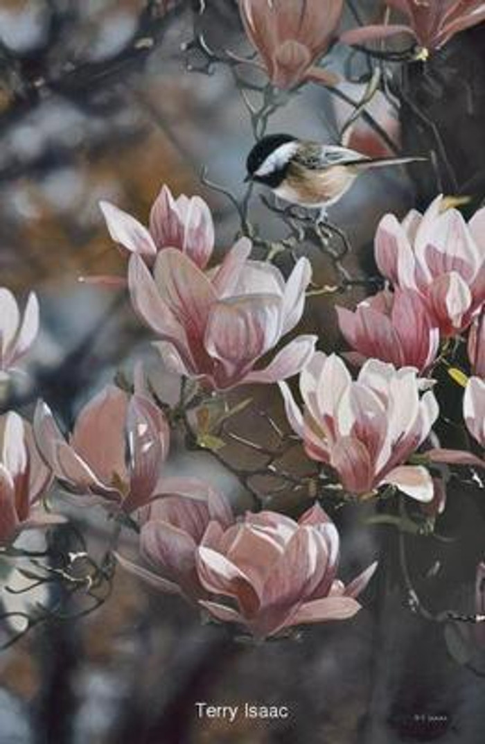In the Pink - Chickadee by Terry Isaac