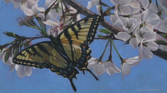 Swallowtail with Cherry Blossoms by Leslie Macon