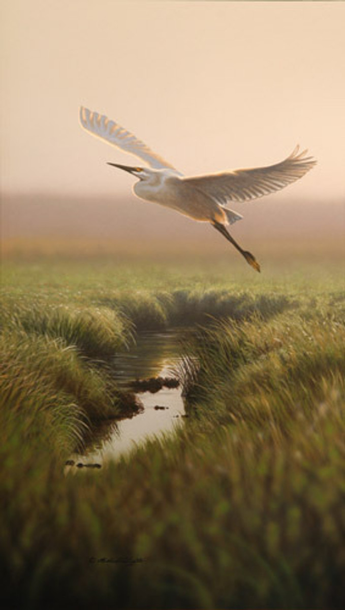 Across the Marsh - Snowy Egret by Richard Clifton