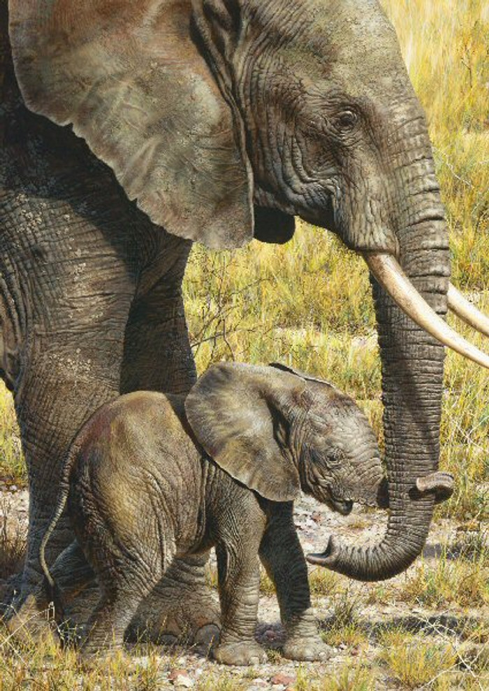 BABY MINE - Elephant, Carl Brenders GICLEE CANVAS