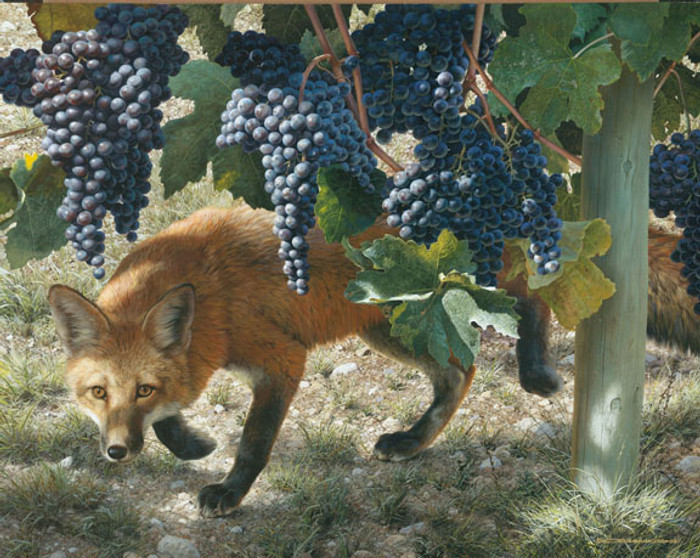 Between the Vines - Red Fox