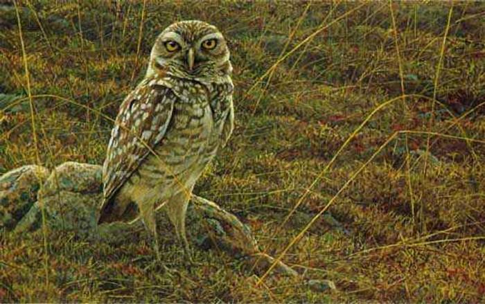 """""""Burrowing Owl"""" by Robert Bateman"""