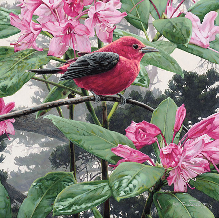 Scarlet Tanager, Rod Frederick   SMALLWORK CANVAS EDITION