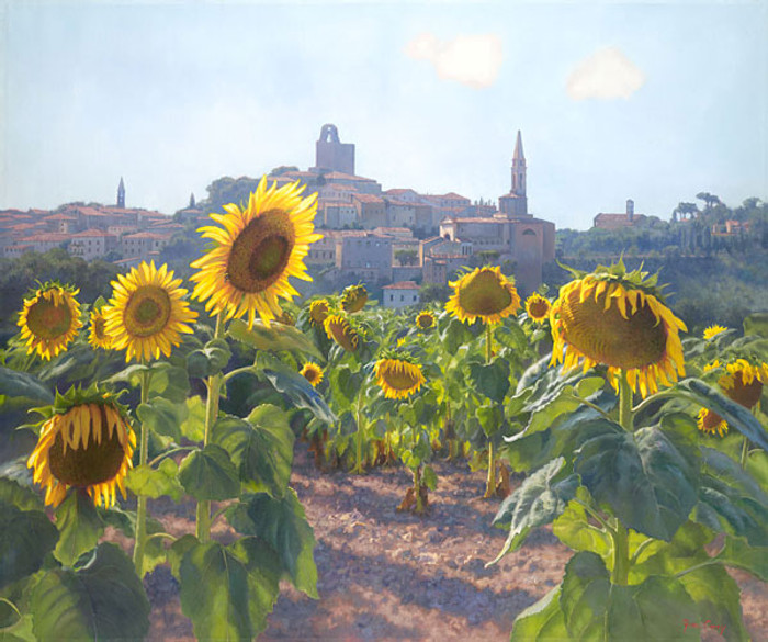 Sunflowers of Castiglion Fiorentino, June Carey  LIMITED EDITION CANVAS