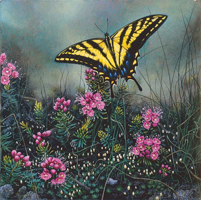 Swallowtail Butterfly and Pink Mountain Heather, Stephen Lyman SMALLWORK ANNIVERSARY EDITION
