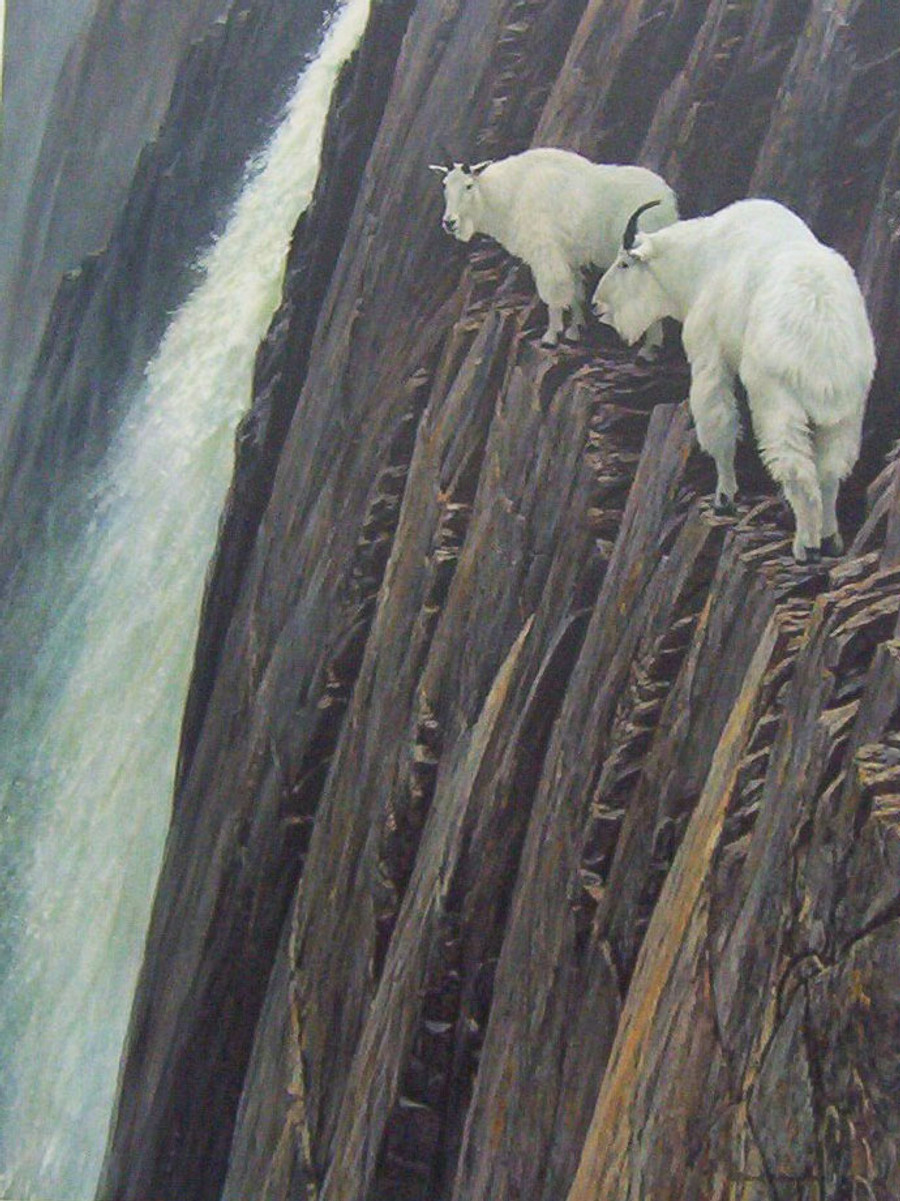 Sheer Drop, Robert Bateman giclee canvas framed