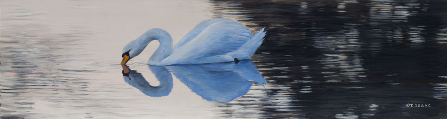 Swan Reflection by Terry Isaac