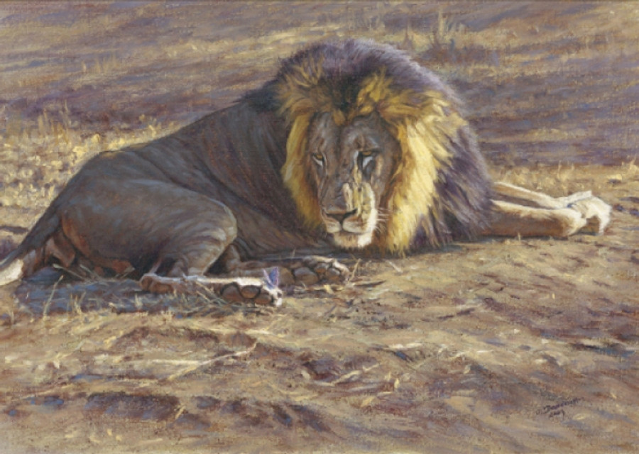 Lion and butterfly
