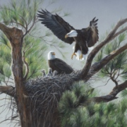 eagles-nest-180x180.jpg