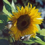 sunbathers-180x180.jpg