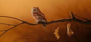 Screech Owl Original Painting