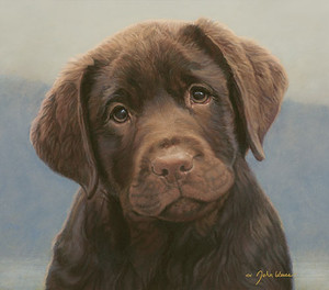 Hot Chocolate - Brown Lab
