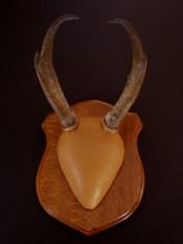 Classic Antelope Antler Mounting Kit