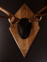 Outfitter Elk