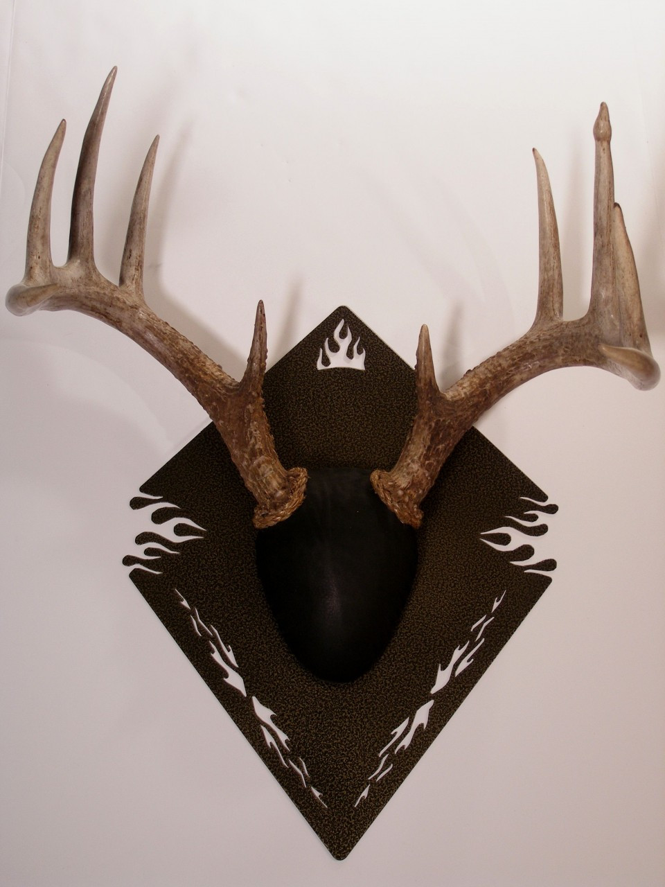 Antler mount kit outlaw deer gold vein images frompo