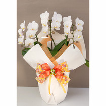 3 Stems White Phalaenopsis Orchids Plant