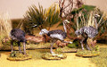 DARK-13 Ostrich